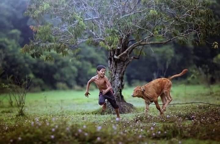 kampung  boy, kampung boy photography, gambar viral di kampung, gambar viral kerbau, gambar viral syukur adam, dallah deen photography, viral photos, gambar syukur khamis viral, gambar kampung boy viral